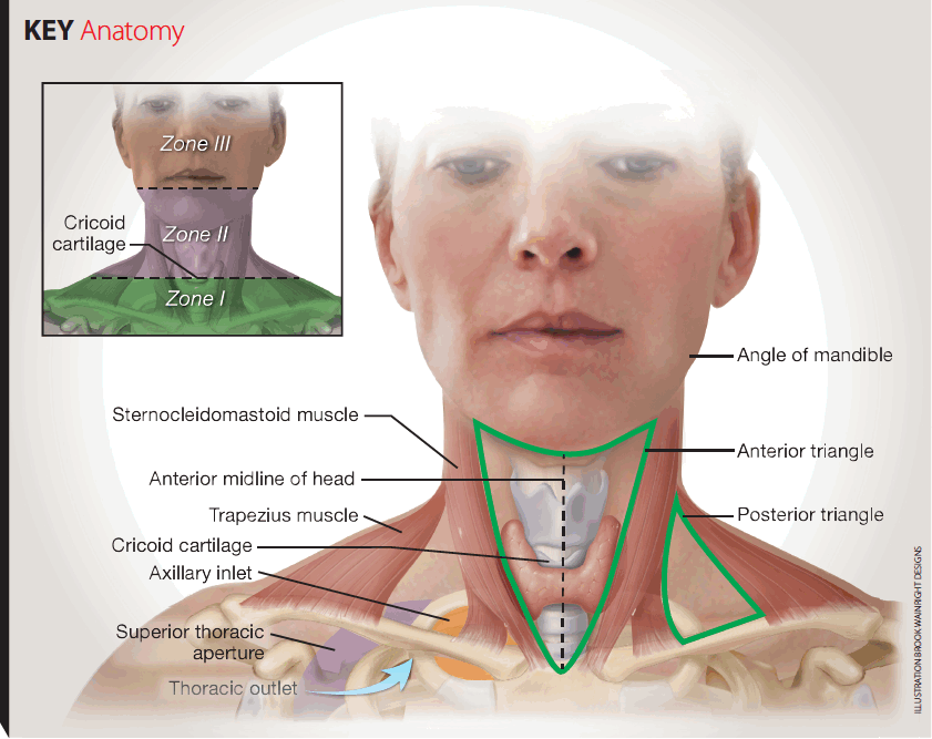 key anatomy of traumatic neck injury