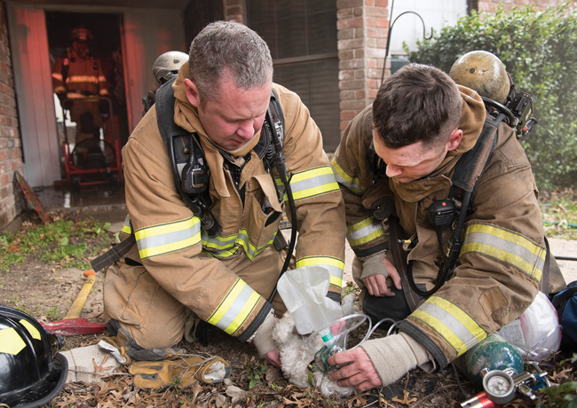 EMS Assessment and Treatment of Dogs and Cats Involved in Fires