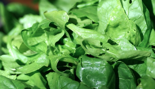 Leafy Green Power: Spinach is Key Ingredient in Solar Breakthrough