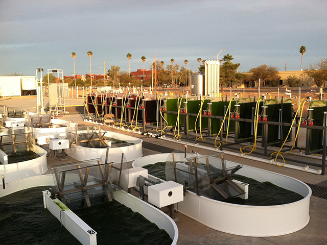 algae research papers In addition to disclosing a new analytical method of extracting oils from algal cells, the new university of texas research paper now online describes a liquid.