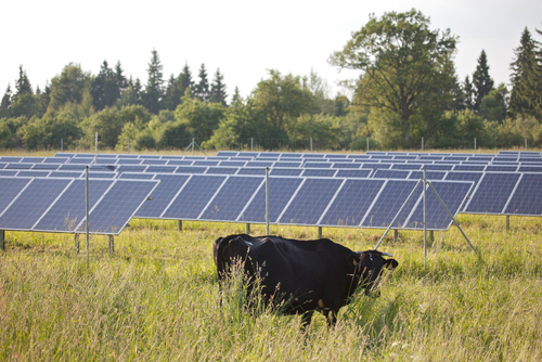 Image result for on farm solar